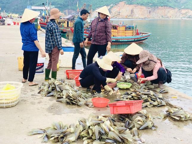 Trúng đậm 'lộc trời', ngư dân Hà Tĩnh kiếm tiền triệu mỗi ngày ảnh 4