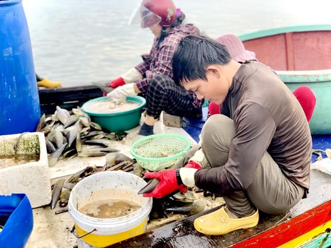 Trúng đậm 'lộc trời', ngư dân Hà Tĩnh kiếm tiền triệu mỗi ngày ảnh 2