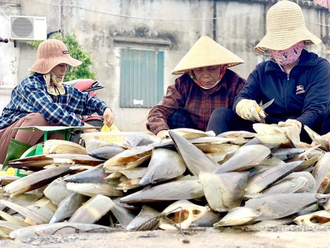 Trúng đậm 'lộc trời', ngư dân Hà Tĩnh kiếm tiền triệu mỗi ngày ảnh 12
