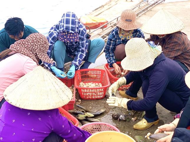 Trúng đậm 'lộc trời', ngư dân Hà Tĩnh kiếm tiền triệu mỗi ngày ảnh 6