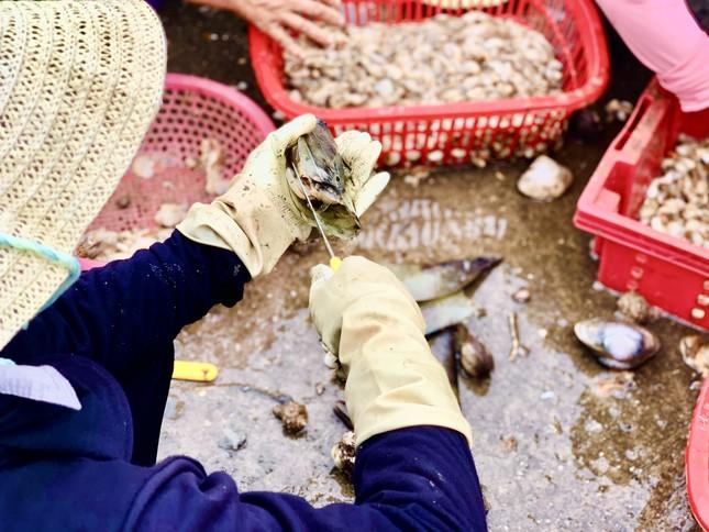 Trúng đậm 'lộc trời', ngư dân Hà Tĩnh kiếm tiền triệu mỗi ngày ảnh 11
