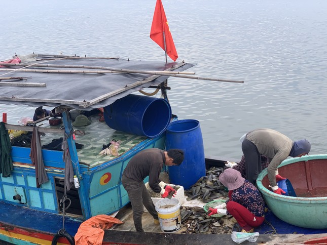 Trúng đậm 'lộc trời', ngư dân Hà Tĩnh kiếm tiền triệu mỗi ngày ảnh 14