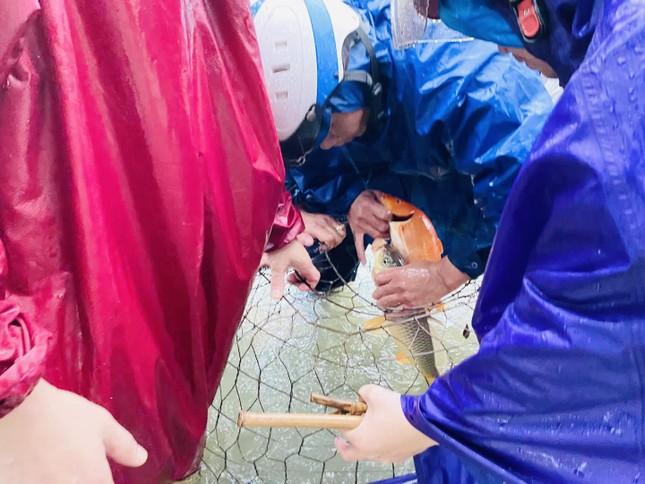 Nước lũ dâng cao, người dân Hà Tĩnh mang nơm ra đường bắt cá ảnh 3
