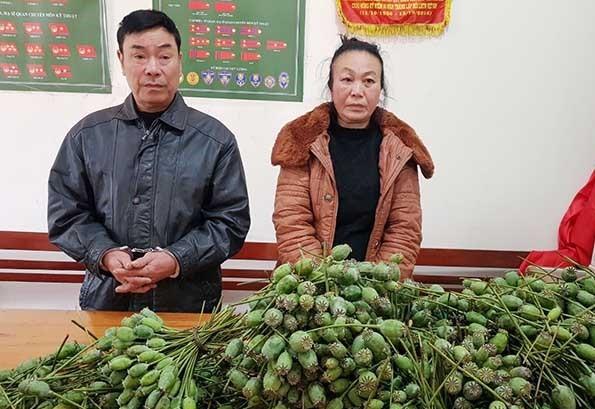 Cặp vợ chồng vận chuyển hàng nghìn quả thuốc phiện tươi đi bán ảnh 1