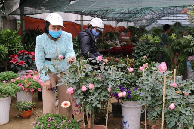 Rực rỡ sắc xuân ở làng hoa lớn nhất thành Vinh ảnh 5
