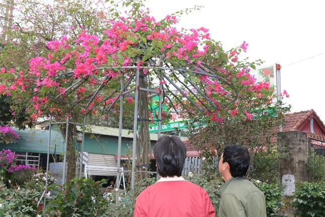Rực rỡ sắc xuân ở làng hoa lớn nhất thành Vinh ảnh 9