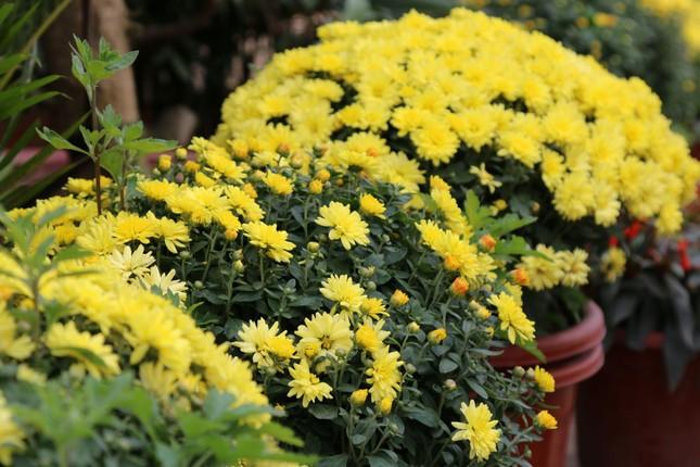 Rực rỡ sắc xuân ở làng hoa lớn nhất thành Vinh ảnh 3