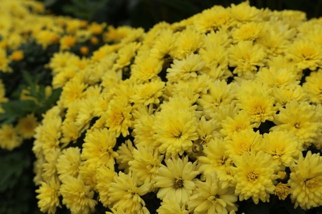Rực rỡ sắc xuân ở làng hoa lớn nhất thành Vinh ảnh 4