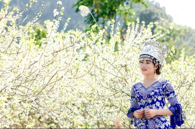 Thiếu nữ khoe sắc bên hoa mận nở trắng muốt nơi cổng trời đẹp như tranh ảnh 8