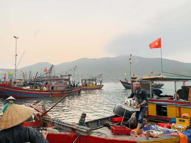 Vươn khơi đầu năm, ngư dân phấn khởi trúng đậm tôm, cá ảnh 5