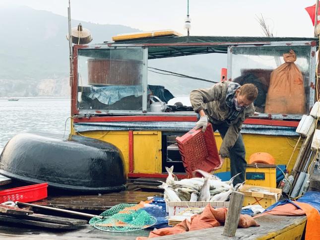 Vươn khơi đầu năm, ngư dân phấn khởi trúng đậm tôm, cá ảnh 4