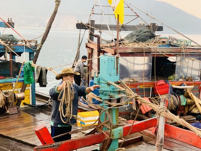Vươn khơi đầu năm, ngư dân phấn khởi trúng đậm tôm, cá ảnh 15