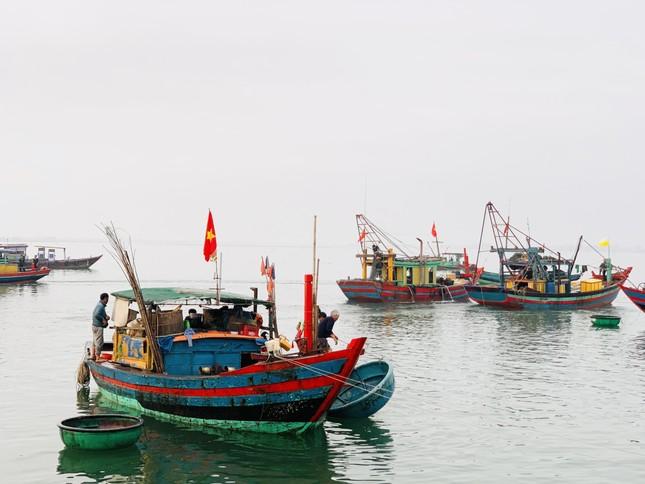 Vươn khơi đầu năm, ngư dân phấn khởi trúng đậm tôm, cá ảnh 18