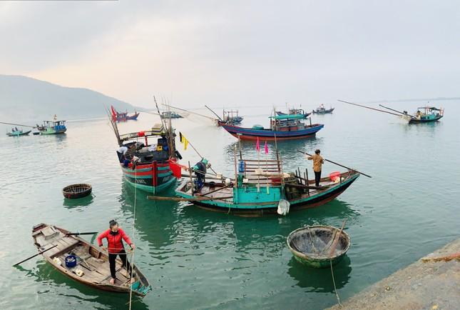 Vươn khơi đầu năm, ngư dân phấn khởi trúng đậm tôm, cá ảnh 3