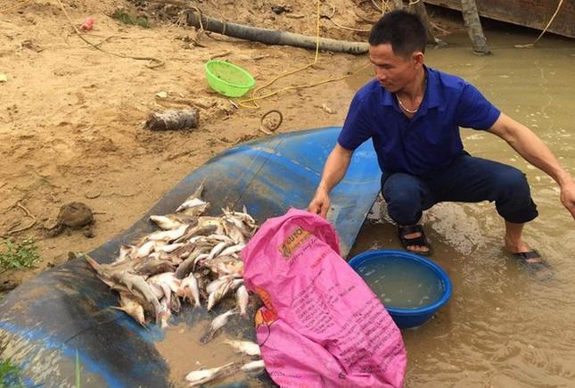Cá chết trắng xoá bất thường trên sông Con: Nghi do nguồn nước lạ? ảnh 1