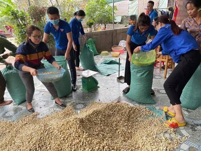 Giá chạm đáy, hàng trăm hecta hành ở Nghệ An chịu phận nằm ruộng ảnh 2