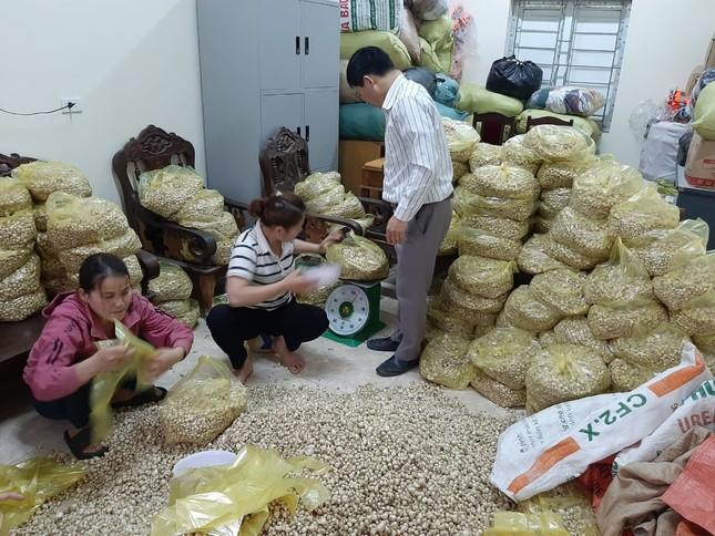 Giá chạm đáy, hàng trăm hecta hành ở Nghệ An chịu phận nằm ruộng ảnh 1