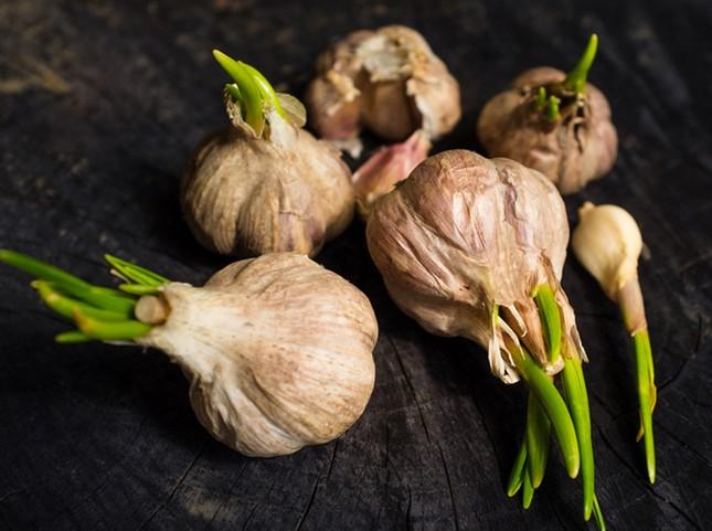 Những loại rau củ mọc mầm có hại và có lợi cho sức khỏe ảnh 2