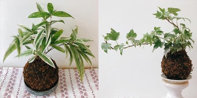 Cặp đôi Nha Trang đem vườn về phố ảnh 3