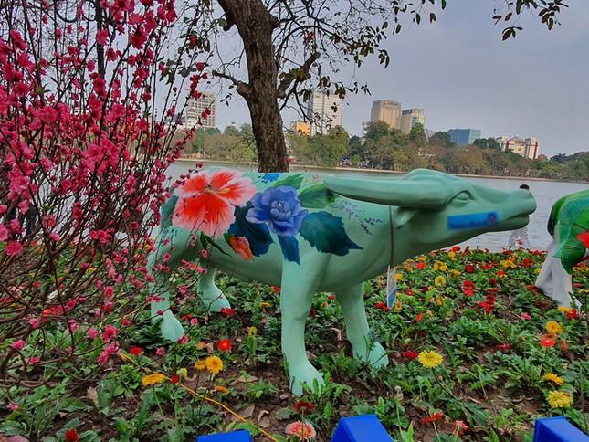 Trâu nghệ thuật 'xuống phố' khiến người dân Thủ đô tò mò thích thú ảnh 1