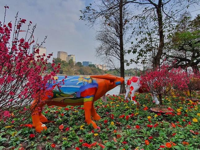 Trâu nghệ thuật 'xuống phố' khiến người dân Thủ đô tò mò thích thú ảnh 8