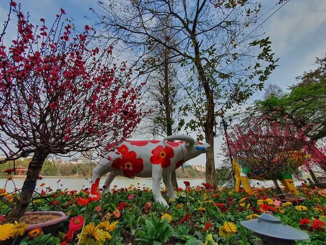 Trâu nghệ thuật 'xuống phố' khiến người dân Thủ đô tò mò thích thú ảnh 9