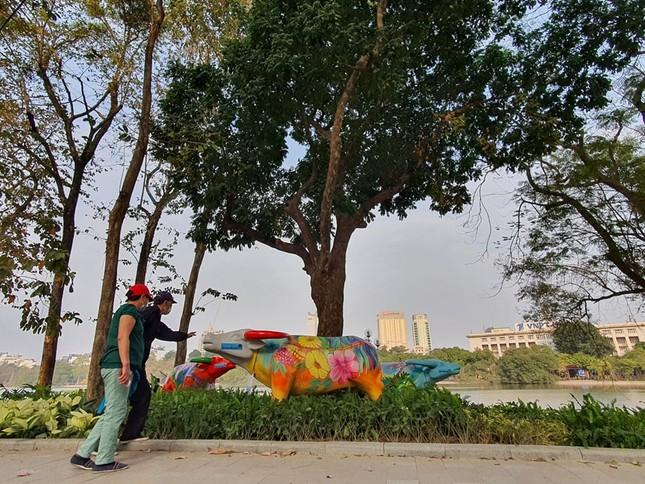 Trâu nghệ thuật 'xuống phố' khiến người dân Thủ đô tò mò thích thú ảnh 5