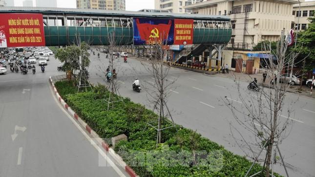 Cận cảnh hàng phong lá đỏ khô héo sắp bị thay thế ở Hà Nội ảnh 3