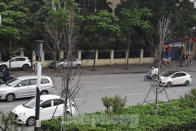 Cận cảnh hàng phong lá đỏ khô héo sắp bị thay thế ở Hà Nội ảnh 12