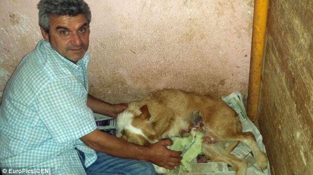Kì lạ cún con có bộ lông màu xanh tự nhiên ảnh 2