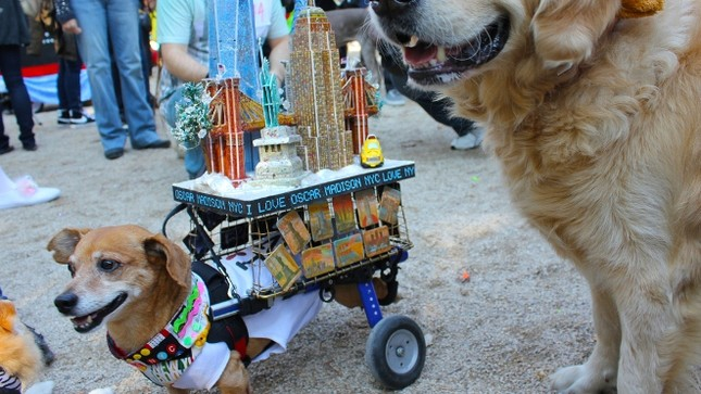 Cún cưng nô nức tham gia lễ hội Halloween ảnh 3
