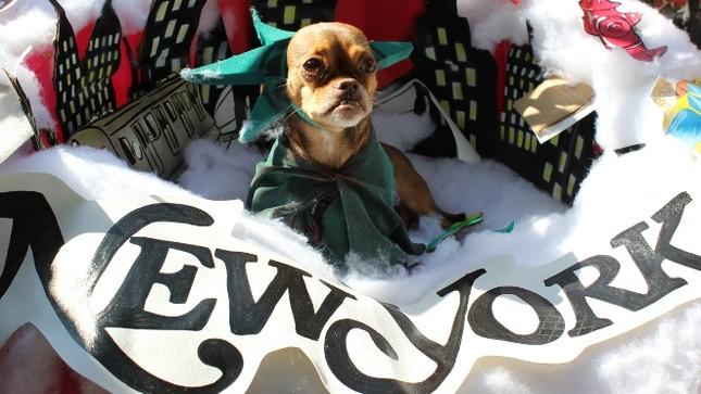 Cún cưng nô nức tham gia lễ hội Halloween ảnh 8