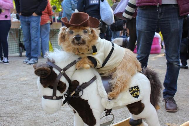 Cún cưng nô nức tham gia lễ hội Halloween ảnh 1