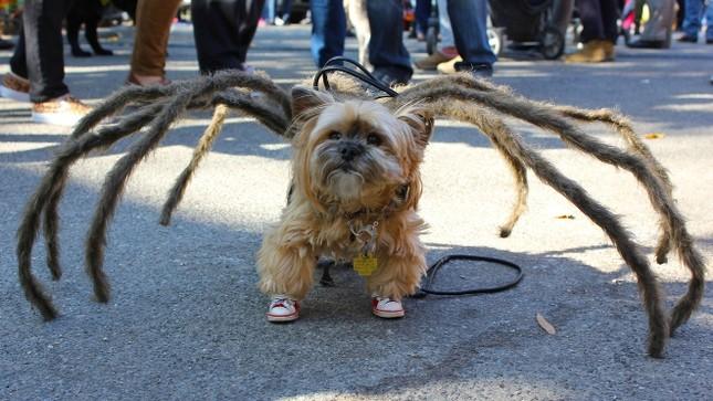 Cún cưng nô nức tham gia lễ hội Halloween ảnh 7