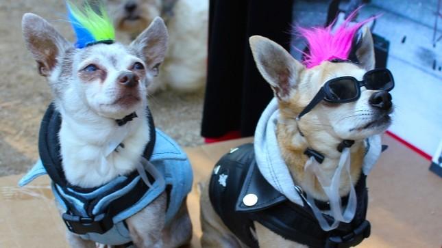 Cún cưng nô nức tham gia lễ hội Halloween ảnh 6