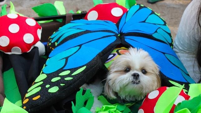 Cún cưng nô nức tham gia lễ hội Halloween ảnh 4