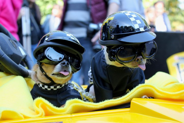 Cún cưng nô nức tham gia lễ hội Halloween ảnh 2