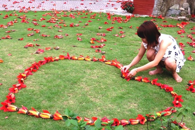 Hoa gạo Đồ Sơn hớp hồn du khách ảnh 10