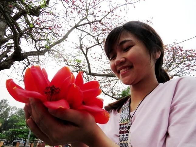 Hoa gạo Đồ Sơn hớp hồn du khách ảnh 11