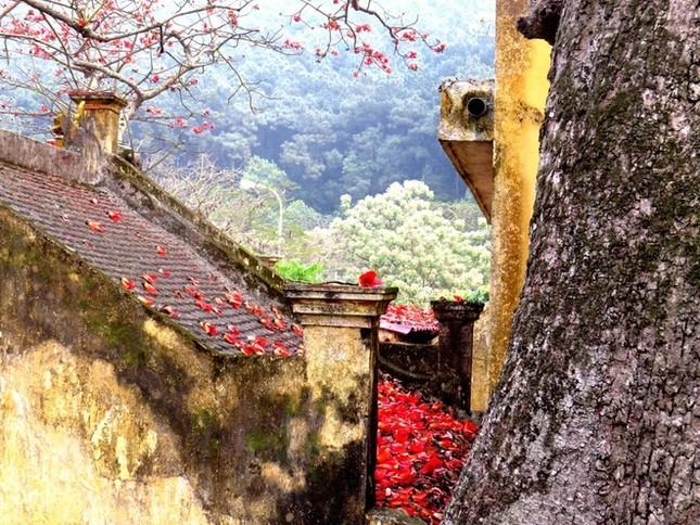 Hoa gạo Đồ Sơn hớp hồn du khách ảnh 6
