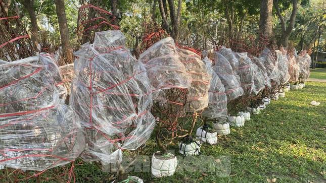 Những gốc đào hàng chục triệu đồng 'đổ bộ' Sài Gòn ảnh 10