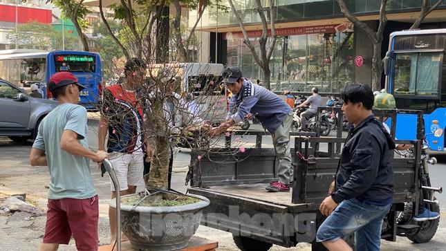 Những gốc đào hàng chục triệu đồng 'đổ bộ' Sài Gòn ảnh 11