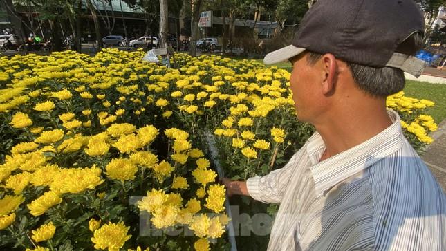 Những gốc đào hàng chục triệu đồng 'đổ bộ' Sài Gòn ảnh 16