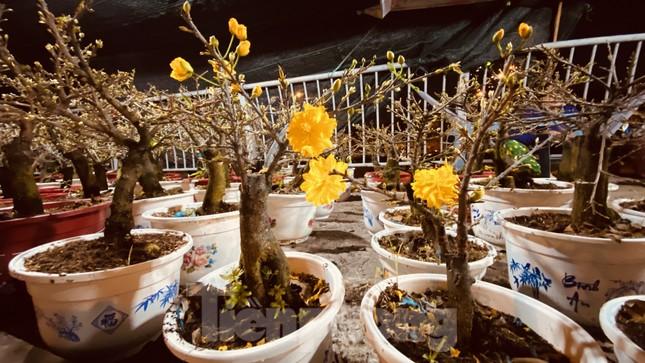 Chợ hoa 'trên bến dưới thuyền' nhộn nhịp về đêm ảnh 7