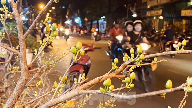 Chợ hoa 'trên bến dưới thuyền' nhộn nhịp về đêm ảnh 3