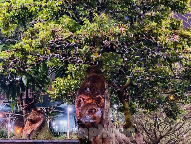 Cây khế 100 tuổi hình đầu chuột có giá nửa tỷ đồng ở Sài Gòn ảnh 2