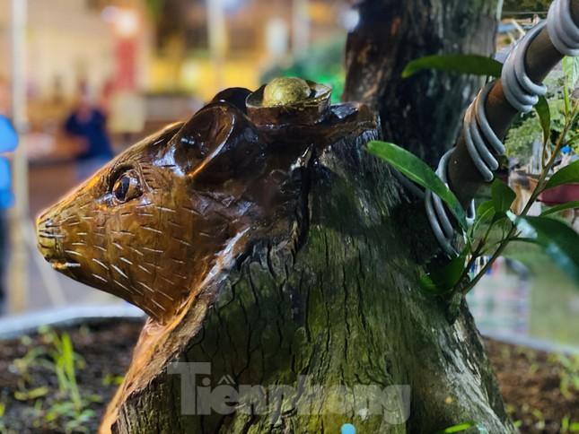 Cây khế 100 tuổi hình đầu chuột có giá nửa tỷ đồng ở Sài Gòn ảnh 4