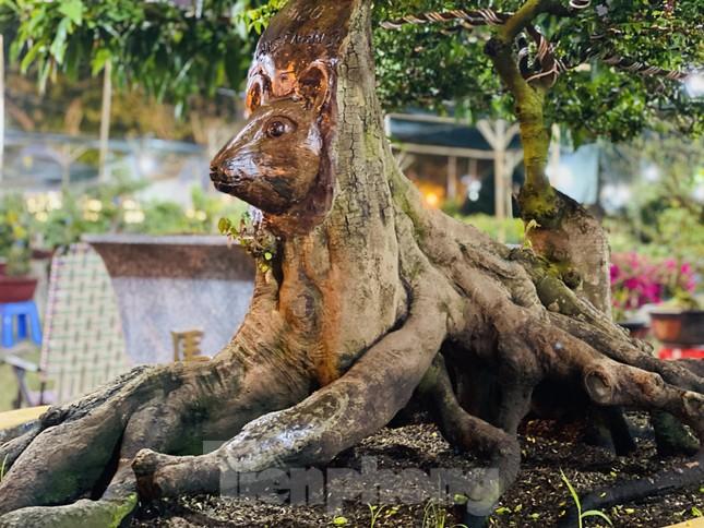 Cây khế 100 tuổi hình đầu chuột có giá nửa tỷ đồng ở Sài Gòn ảnh 5