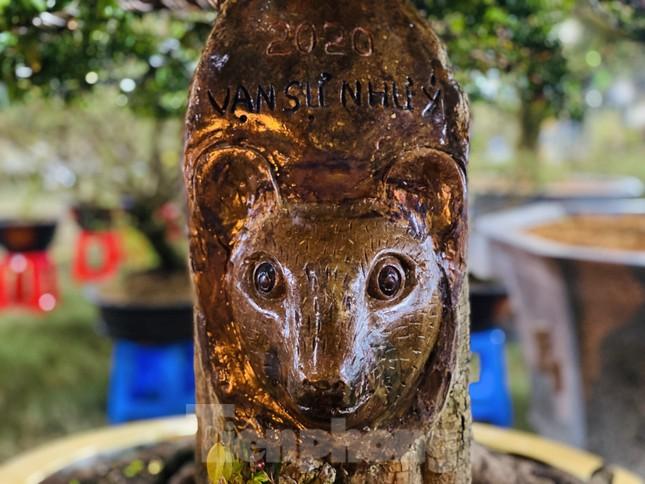 Cây khế 100 tuổi hình đầu chuột có giá nửa tỷ đồng ở Sài Gòn ảnh 7