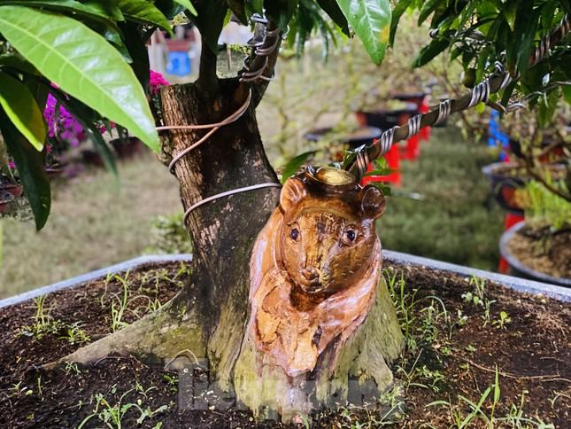 Cây khế 100 tuổi hình đầu chuột có giá nửa tỷ đồng ở Sài Gòn ảnh 9